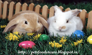caring for rabbits