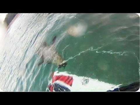 Killer Seal Or Scared GoPro Surfer Fail