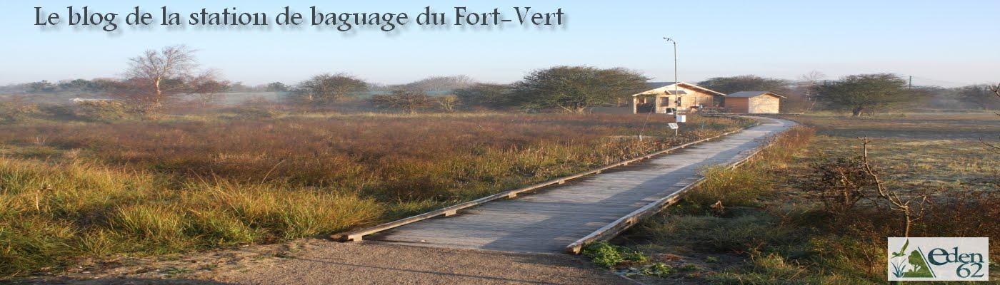 Le blog de la station de baguage du Fort-Vert