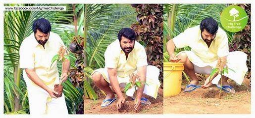 mammootty my tree challenge, Malayalam actor mammootty tree challenge to Sharook Khan Vijay and Surya, Tamil news daily