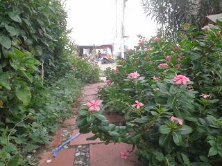 ทางเดินเล็กในสวน