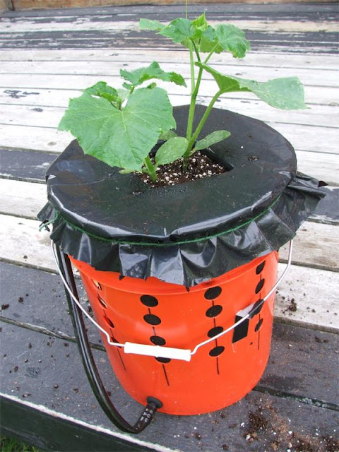 Wasilla alaska garden adventures build your own alaska Self watering 5 gallon bucket garden