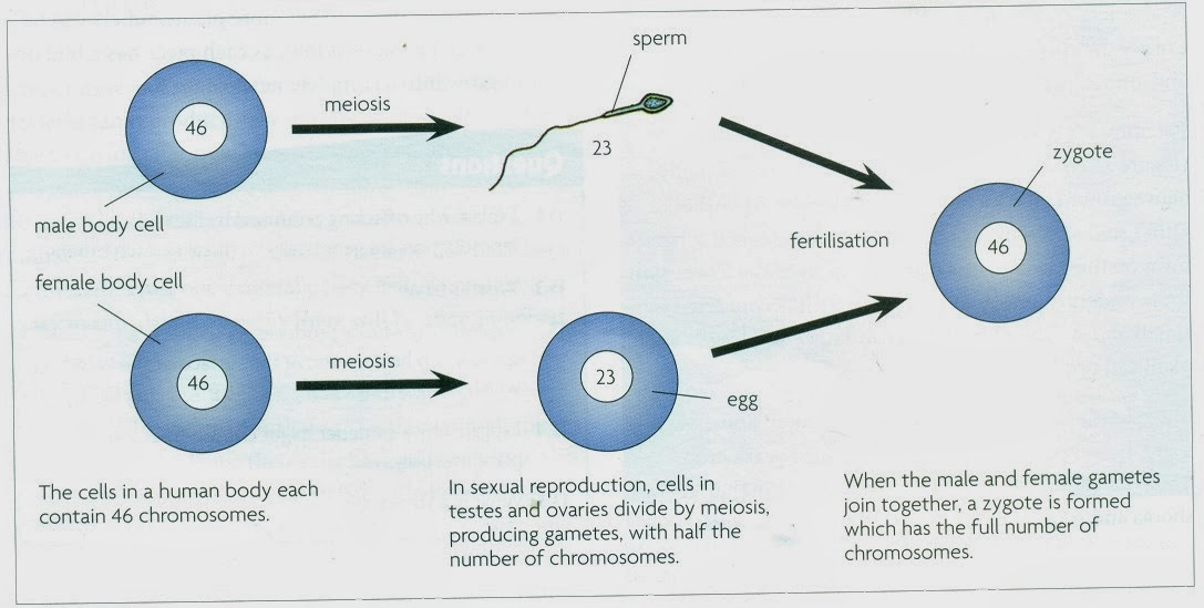 What is a sexual reproduction picture 34