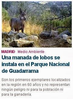 Los lobos repueblan Guadarrama