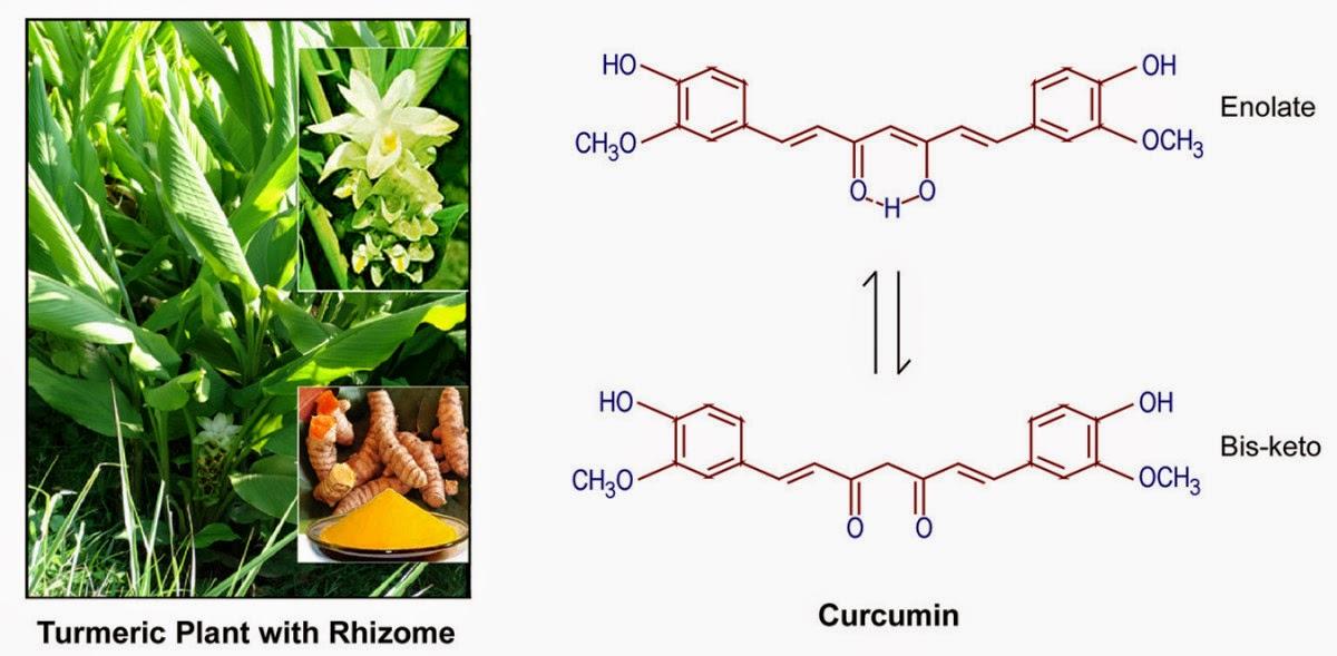 Turmeric veya zerdeçal bitkisi, kurkuminin kimyasal yapısı