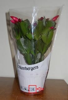 planta comprada en el lidl