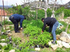 Albanian Police Uproote About 12,000 Cannabis Plants