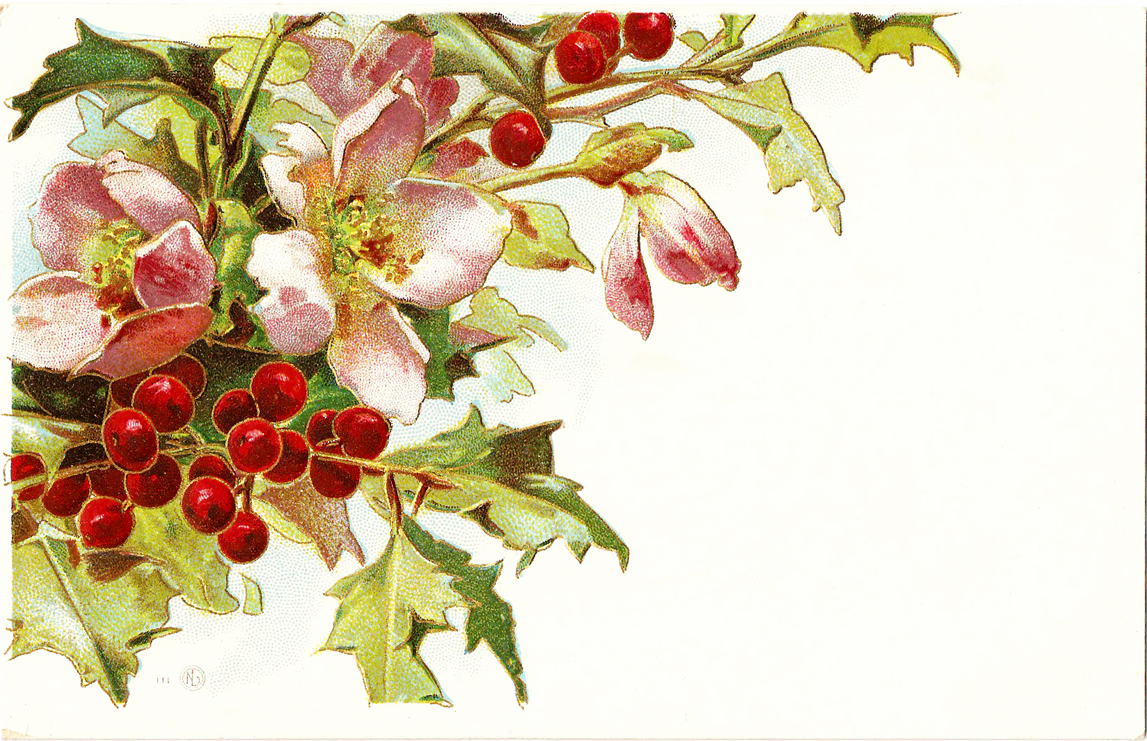CatnipStudioCollage-: Free Vintage Clip Art - Christmas Holly and ...