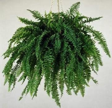 Decoracion actual de moda decoraci n de interiores con - Plantas colgantes interior ...