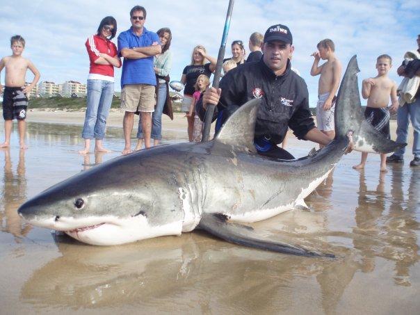 Shark diver shark diving swimming with sharks for Great white shark fishing