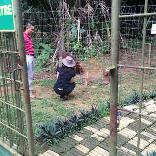 Bukit Merah Orang Utan Sanctuary Ersatz Expat