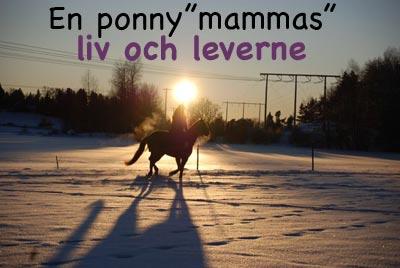 """En ponny""""mammas"""" liv och leverne"""
