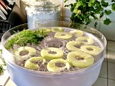 Preserve fruits, vegetables and herbs with dehydrating