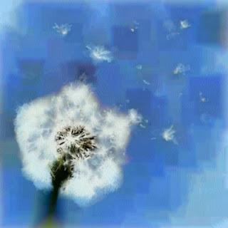 Al vent (Guillem Sostres Miranda)