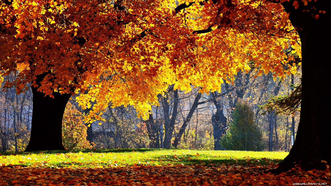 http://4.bp.blogspot.com/-wyZHSYk12DY/T-LHPZM8FsI/AAAAAAAAAgI/ShrEw5Nx6Hw/s1600/nature-wallpaper-1366x768-004.jpg