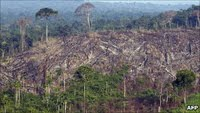 Deforestation / ILLEGAL LOGGING