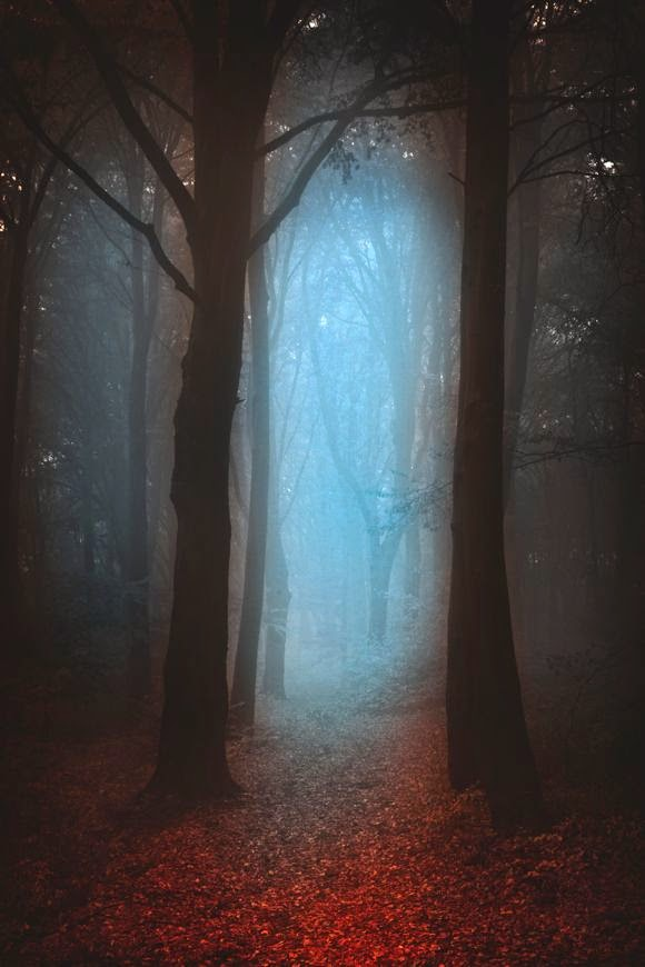 Mystic Forest Stock Photo