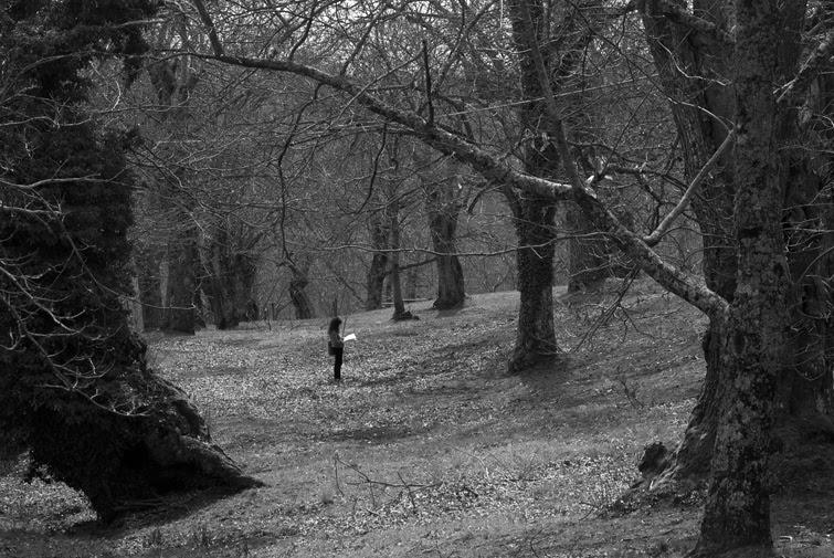 Risultati immagini per bosco nei monti cimini gustavo piccinini