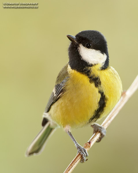 Nature versus nurture -- better looking birds have healthier babies, Science relief