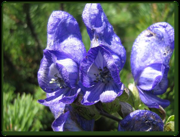 Plante cu nume ciudate si efecte garantate