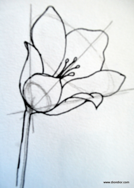 how to draw all flowers
