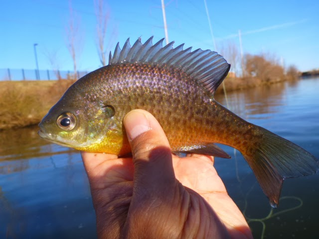 The life amphibious saturday fish a mania for Finned fish allergy