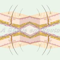 Corte esquemático da pele humana
