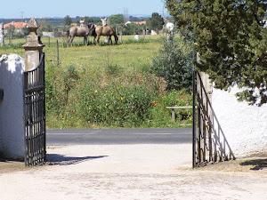 Portão da quinta de Nossa Senhora da Piedade