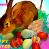 Latest Easter Day Bunny Wallpapers, Easter Bunny Images, Easter cute bunny pictures