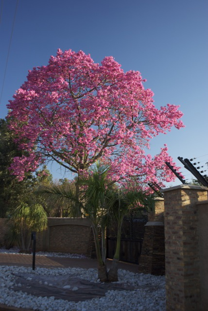 South african plants and trees - photo#25