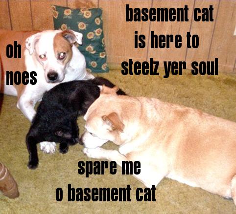 basement cat original all bow to basement cat