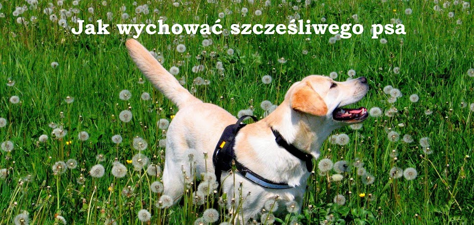 Jak wychować szczęśliwego psa