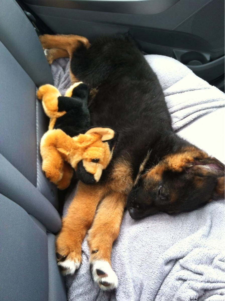 Cute dogs - part 9 (50 pics), puppy sleeps with stuffed dog
