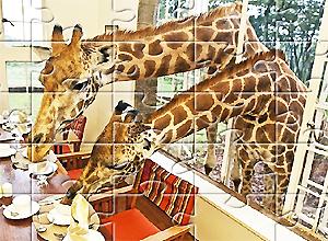 diez puzzles de jirafas