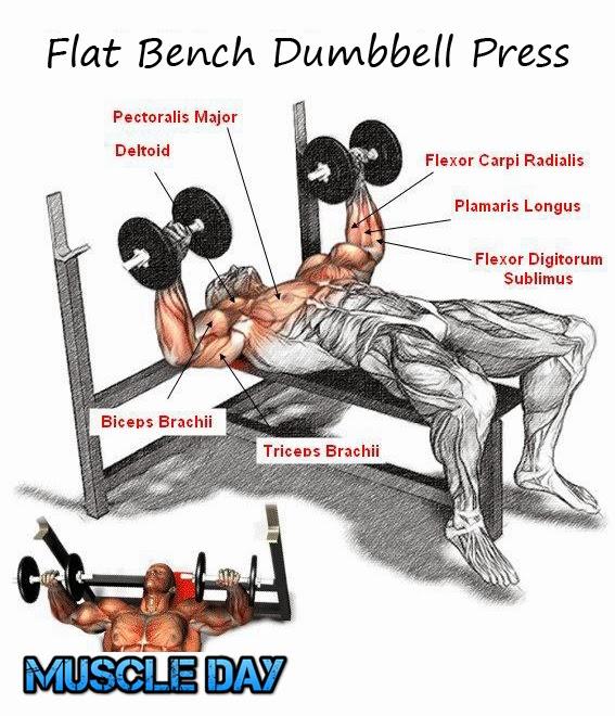 Chest Exercises - Flat Bench Dumbbell Press