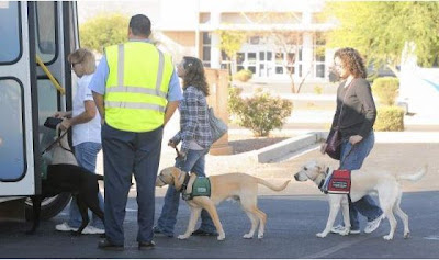 a black and two yellow Lab GDB puppies board a bus with their raisers while a man in a yellow vest assists
