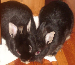 króliczki miniaturki - Niuniek i Niunia