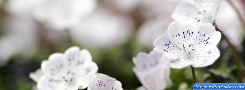 Las Mejores Portadas para tu perfil de Facebook ÷ - Flores