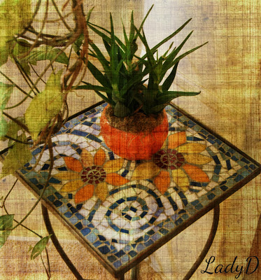 orange table with aloe vera