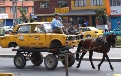 smešna slika: konjski taksi