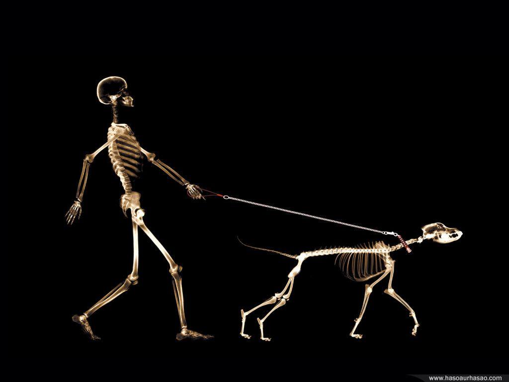 http://4.bp.blogspot.com/-x1xQ4jgebI4/T6F1BI9RpZI/AAAAAAAAAv8/KvyeU8WtLVY/s1600/funny-skeleton-wallpaper.jpg