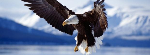 guzel kus facebook kapak resimleri+%252818%2529 35 En Güzel Facebook Kuş Kapak Resimleri indir