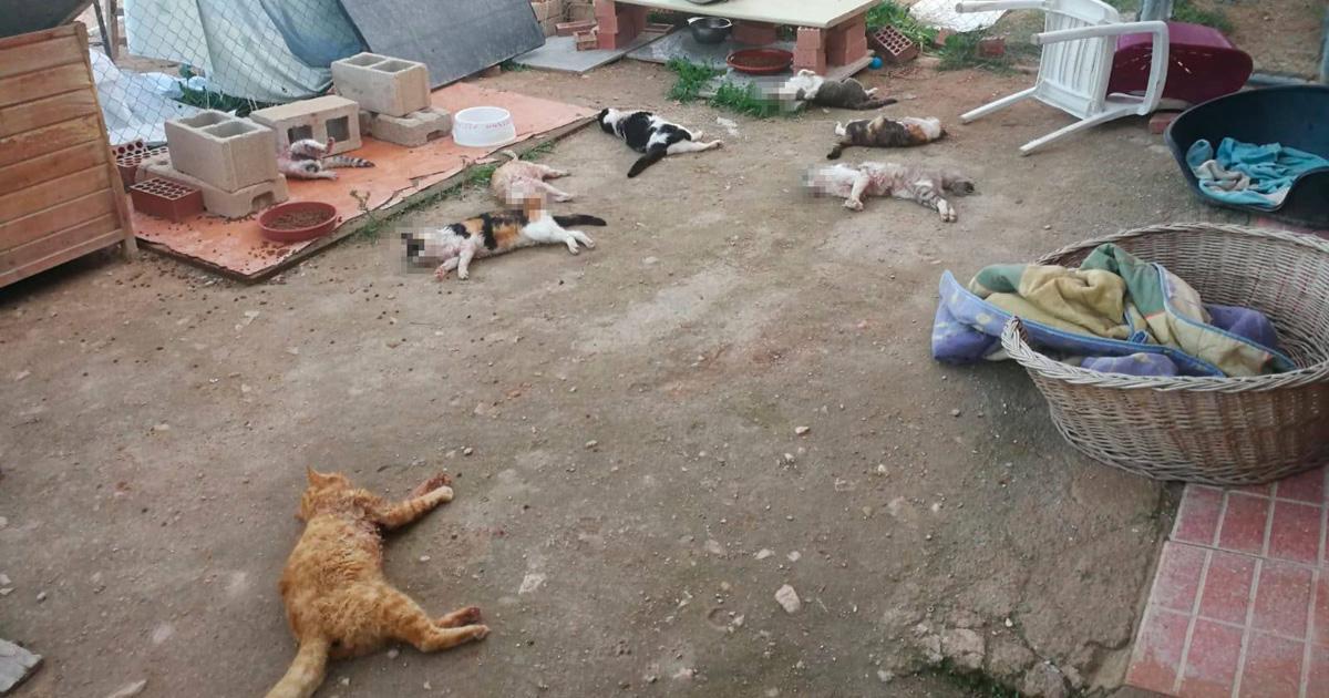 Justicia por los gatos asesinados en el albergue de Felinos Lo Morant