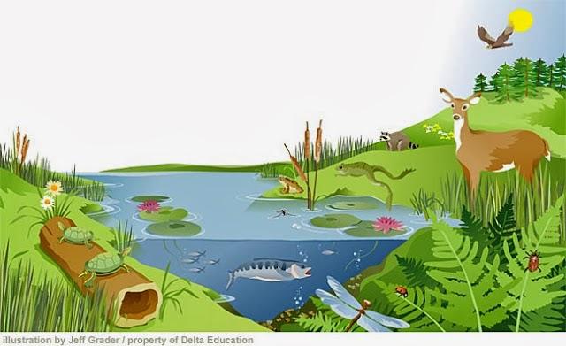 Materi Ipa Sd Pengertian Dan Komponen Ekosistem