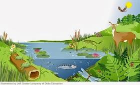 Pengertian, Komponen, dan Macam macam Ekosistem