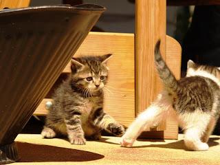 kitties playing
