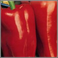 Сладкий перец сорт «Ариес»