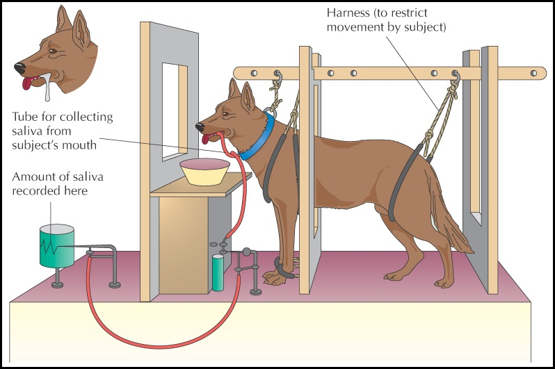 the importance of classical conditioning in psychological behavior Psychology 8 ed, david myers module 21 ideas a of classical conditioning the importance cognitive.