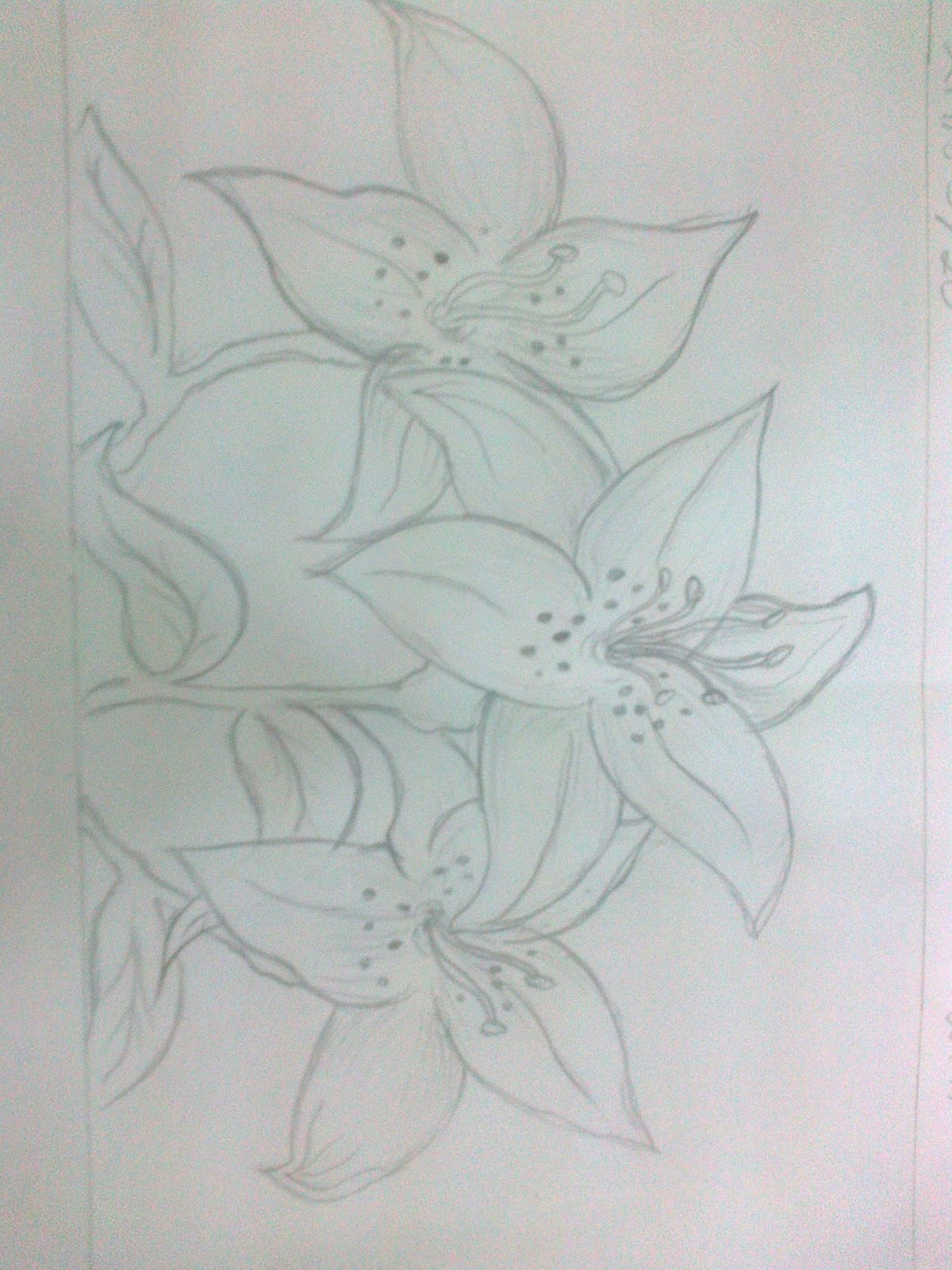 sketsa bunga lili