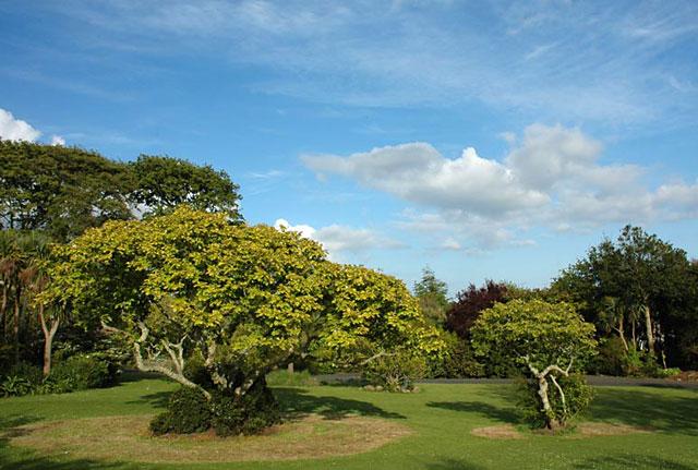 Sub-Tropical Morrab Gardens